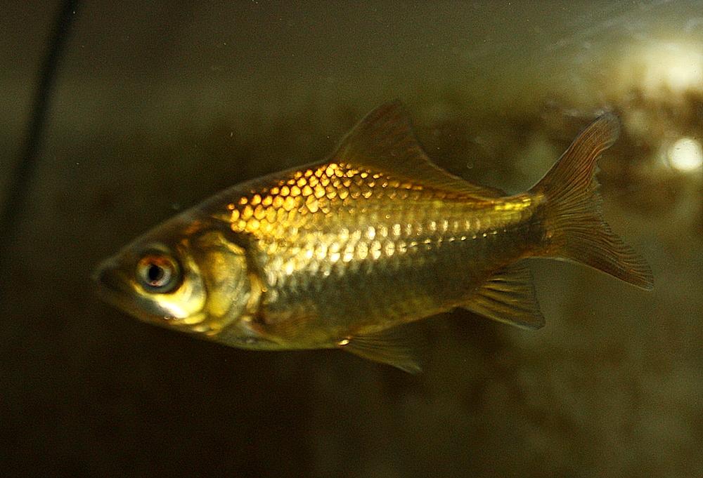 Koi und andere fische im gartenteich garten und for Koi mit goldfischen