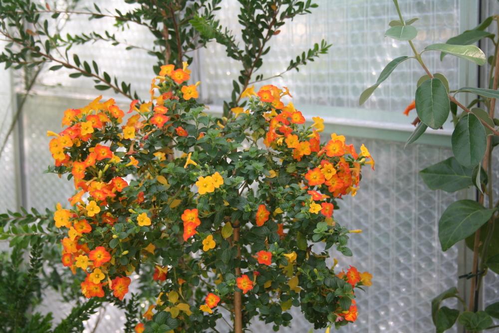 vermehren von rosen durch stecklinge