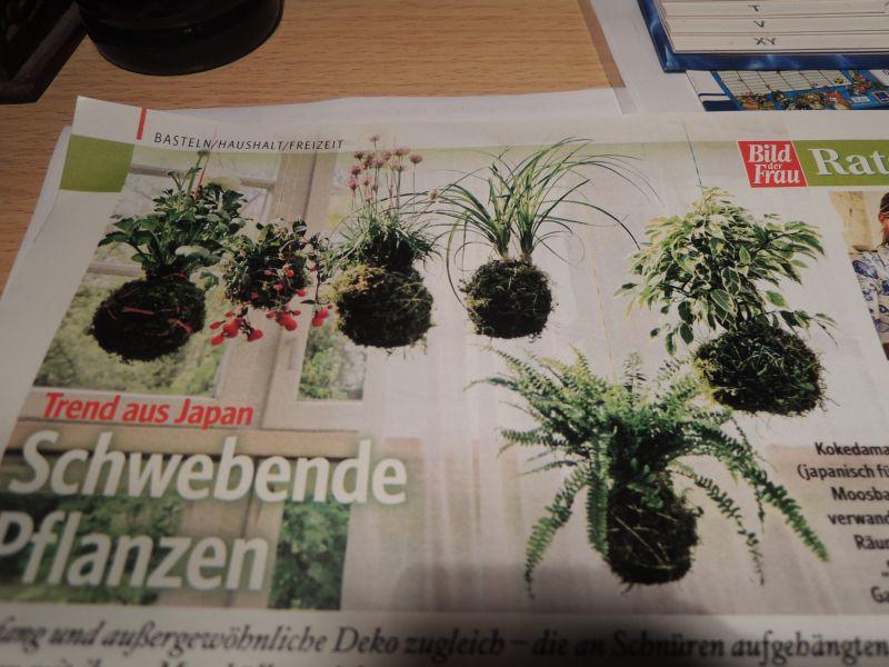 Schwebende pflanzen trend aus japan garten und for Japan garten pflanzen